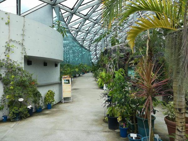 新宿御苑、大温室